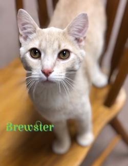Brewster 41419