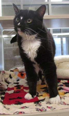 Willow - Meet me at the 56th & Hwy 2 Petco!