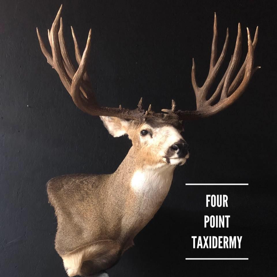 Four Point Taxidermy
