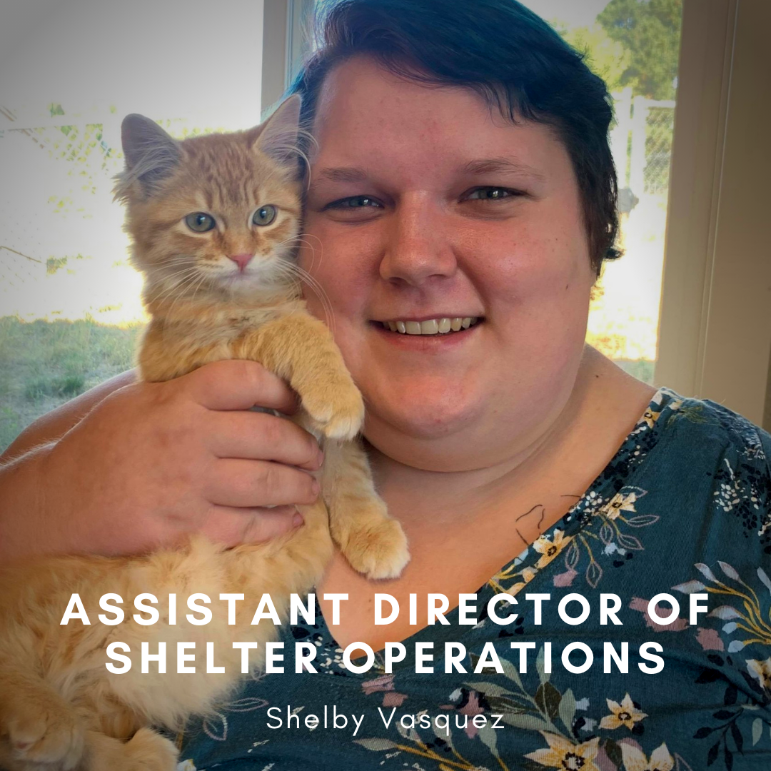 Assistant Director of Shelter Operations