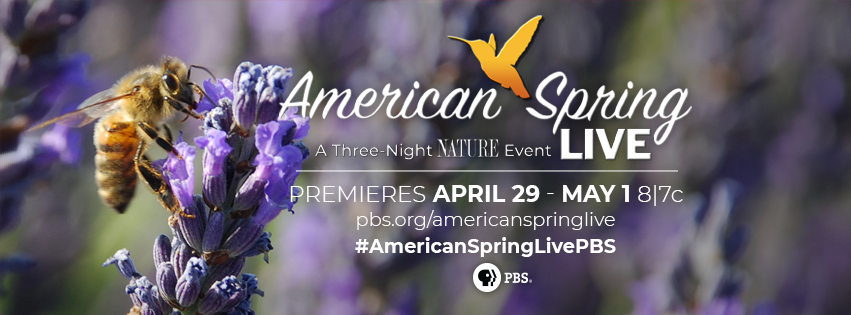 "Look for SRT on ""Nature: American Spring LIVE"""