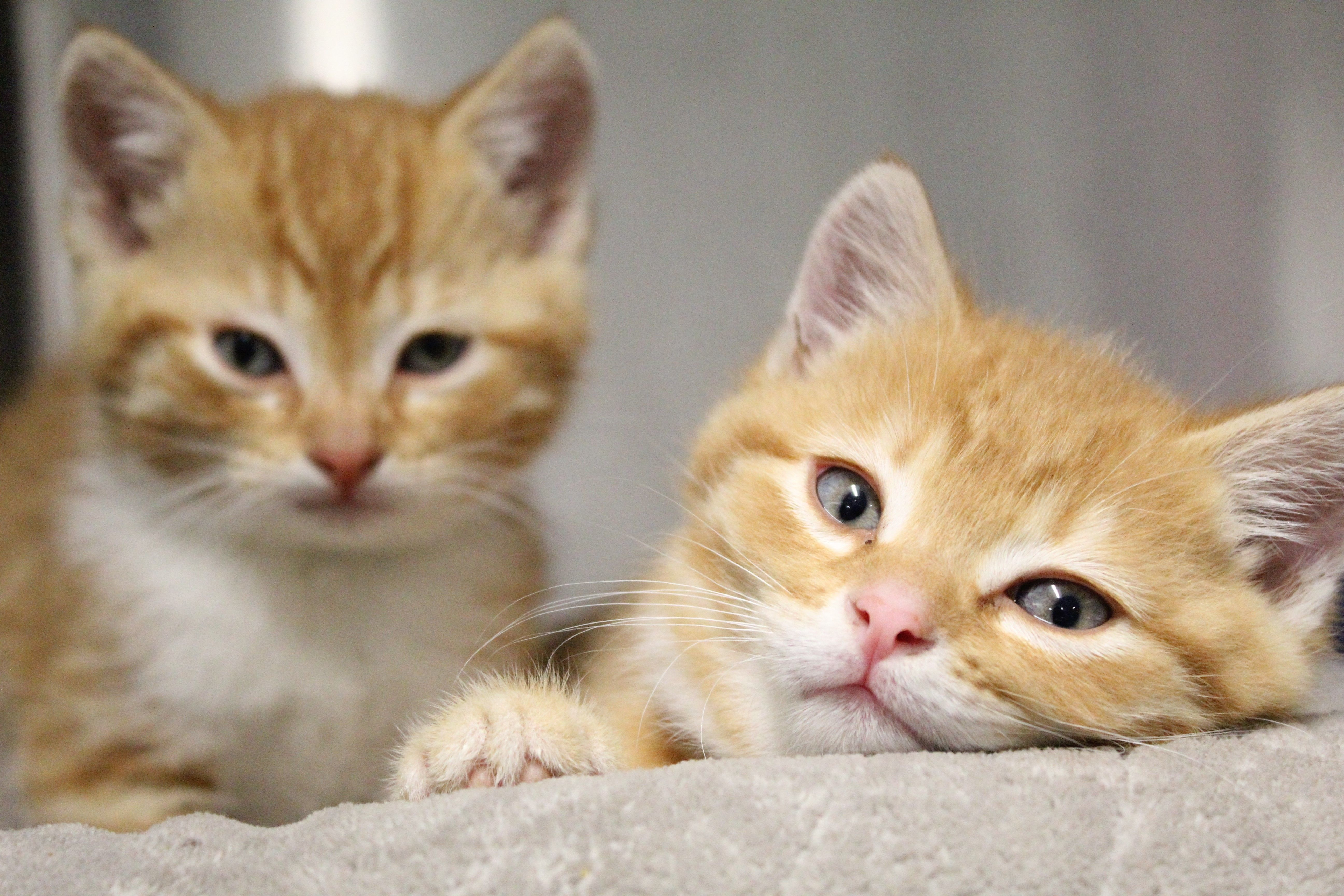 Right Meow at TCHS, Kittens Are 2 Purr 1!