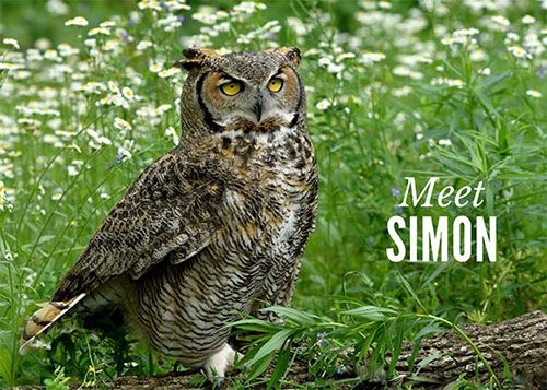 Meet Simon, Education Ambassador