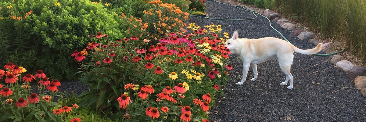 Dog-friendly yards / Attracting Birds...