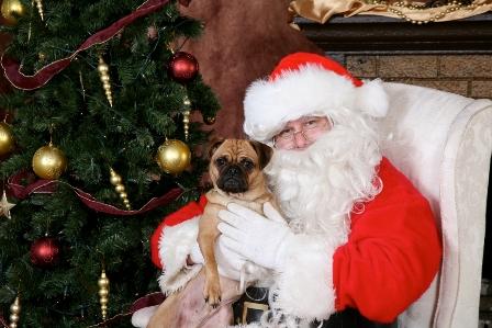 Santa Paws Holiday Portrait Fundraiser
