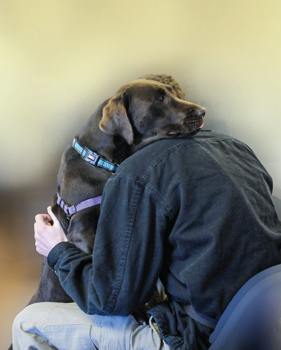 Service Dogs and Suicide Prevention