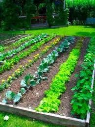 Tips for Gardeners