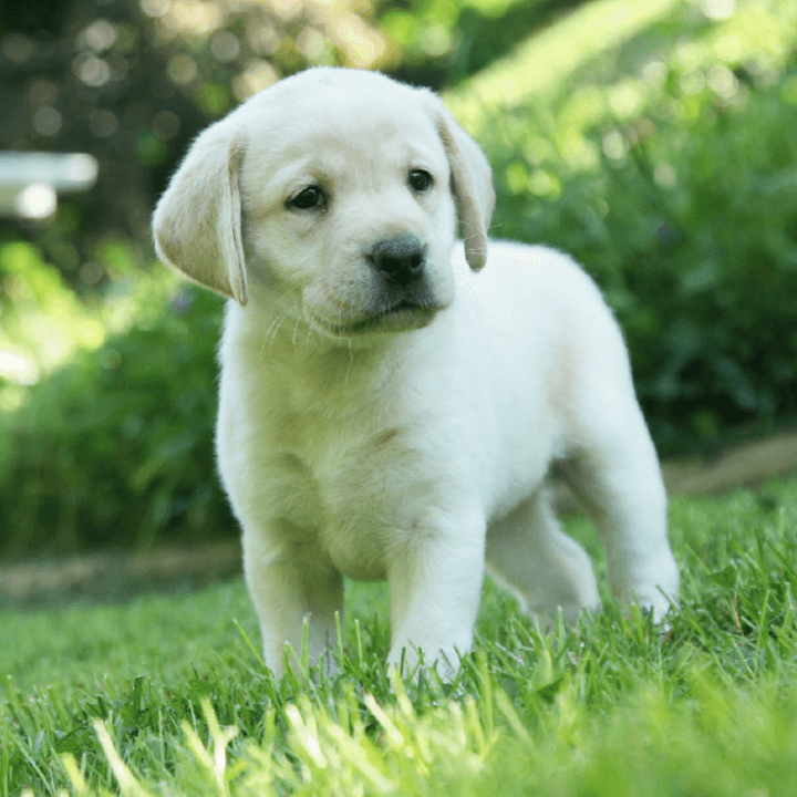 Team Puppy 1