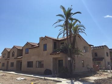 Decades-Old Carpinteria Palms Replanted at Affordable Housing Development