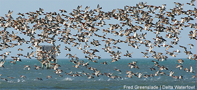 Surveys Says: Weather Moved Waterfowl South