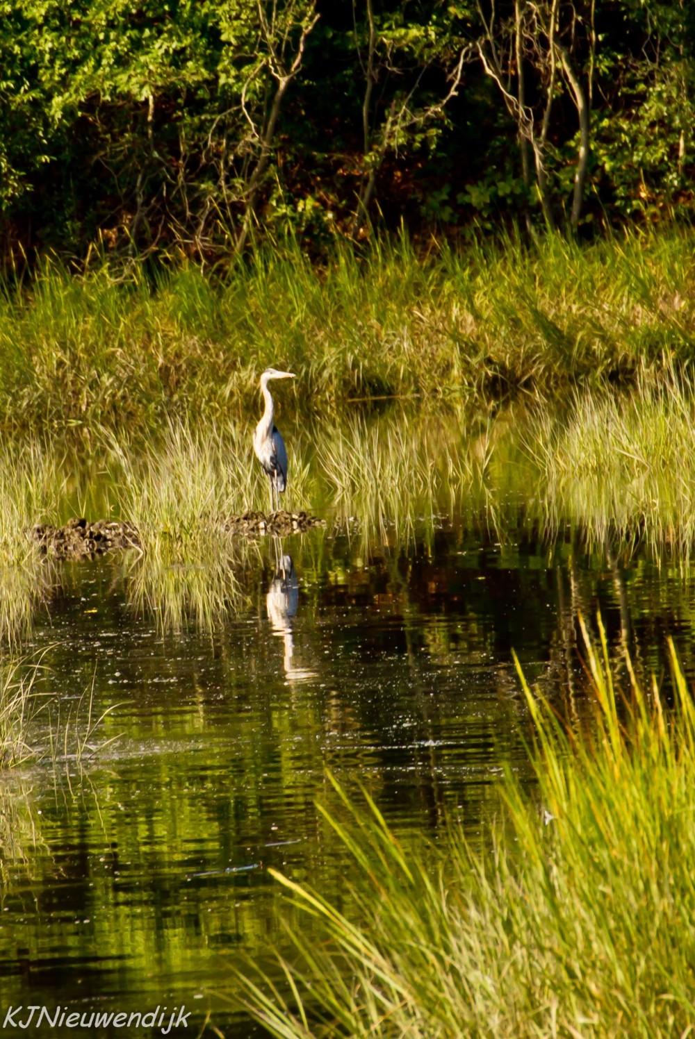 Touisset Marsh Wildlife Refuge Audubon Society of Rhode Island Warren Salt Marsh Kickemuit River Hiking Family Environment