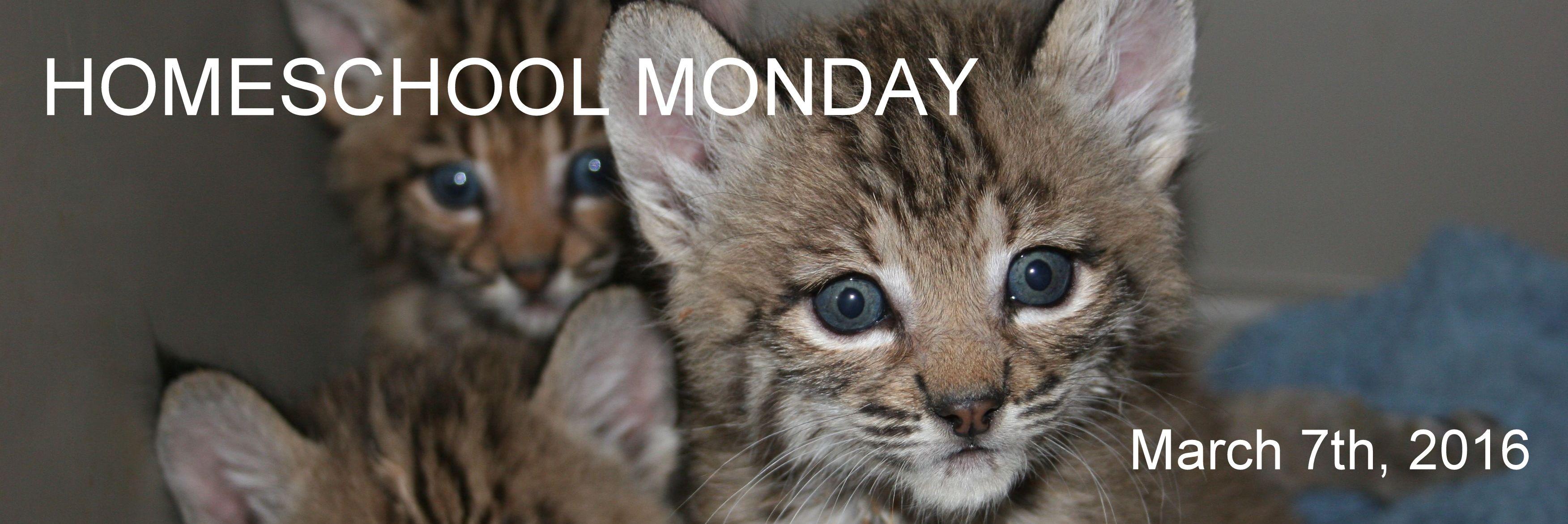 Homeschool Monday March