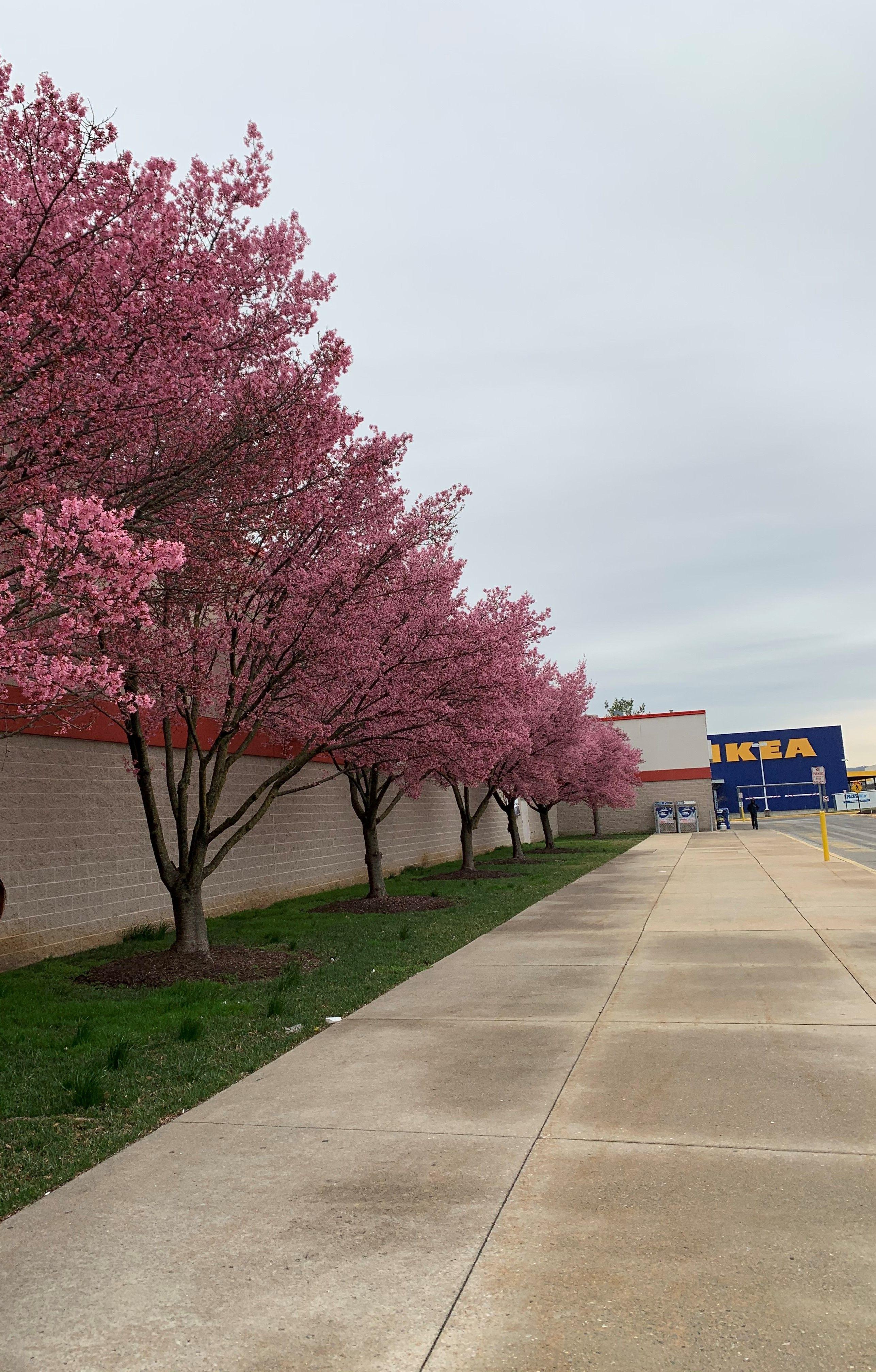 (2) Spring blossoms