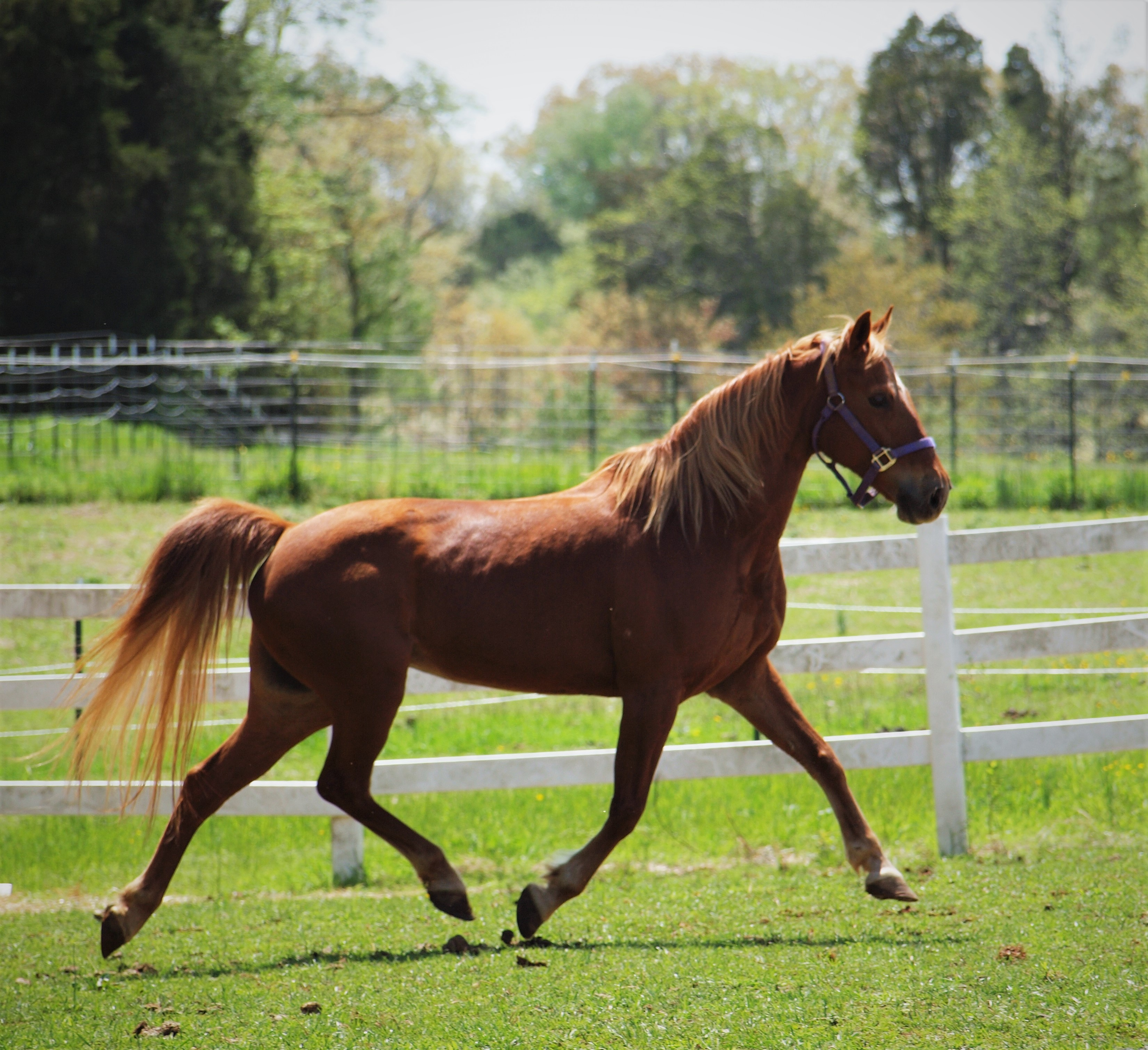 Horse Haven of Tennessee : Home