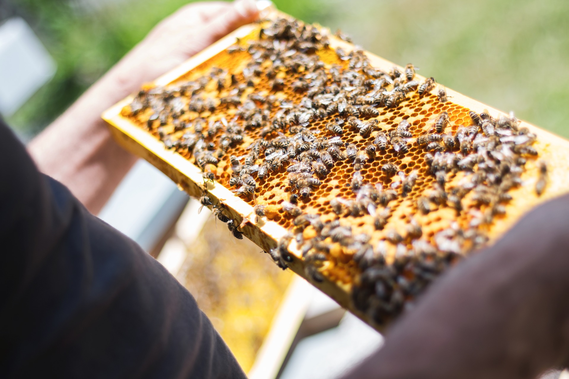 Want to 'bee' a beekeeper?