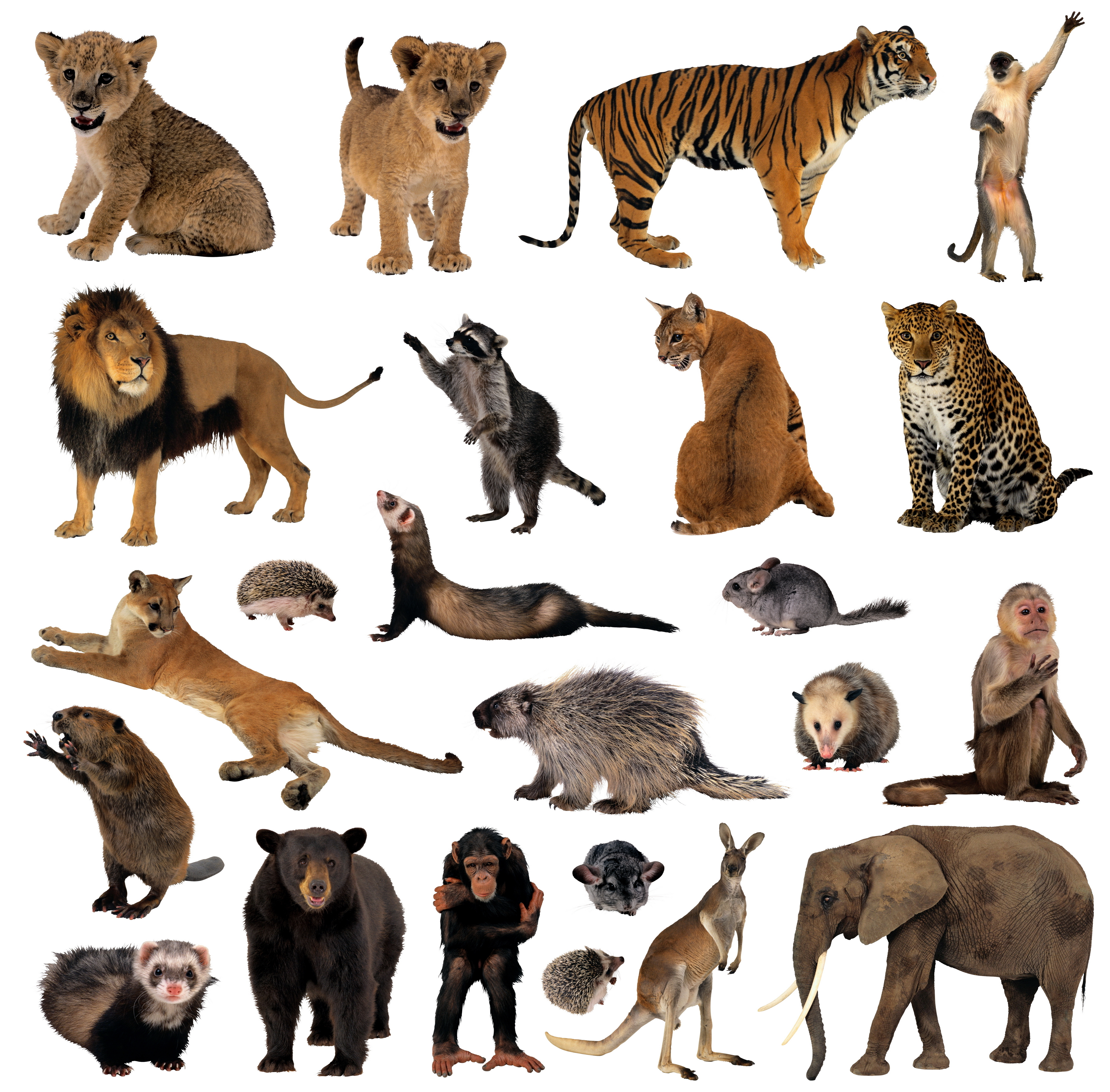 custom lifesize animal cutouts