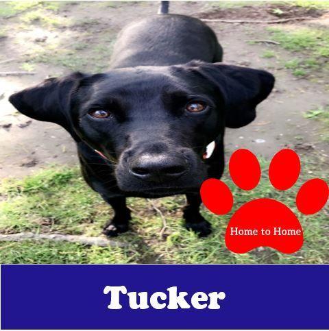 Tucker H2H