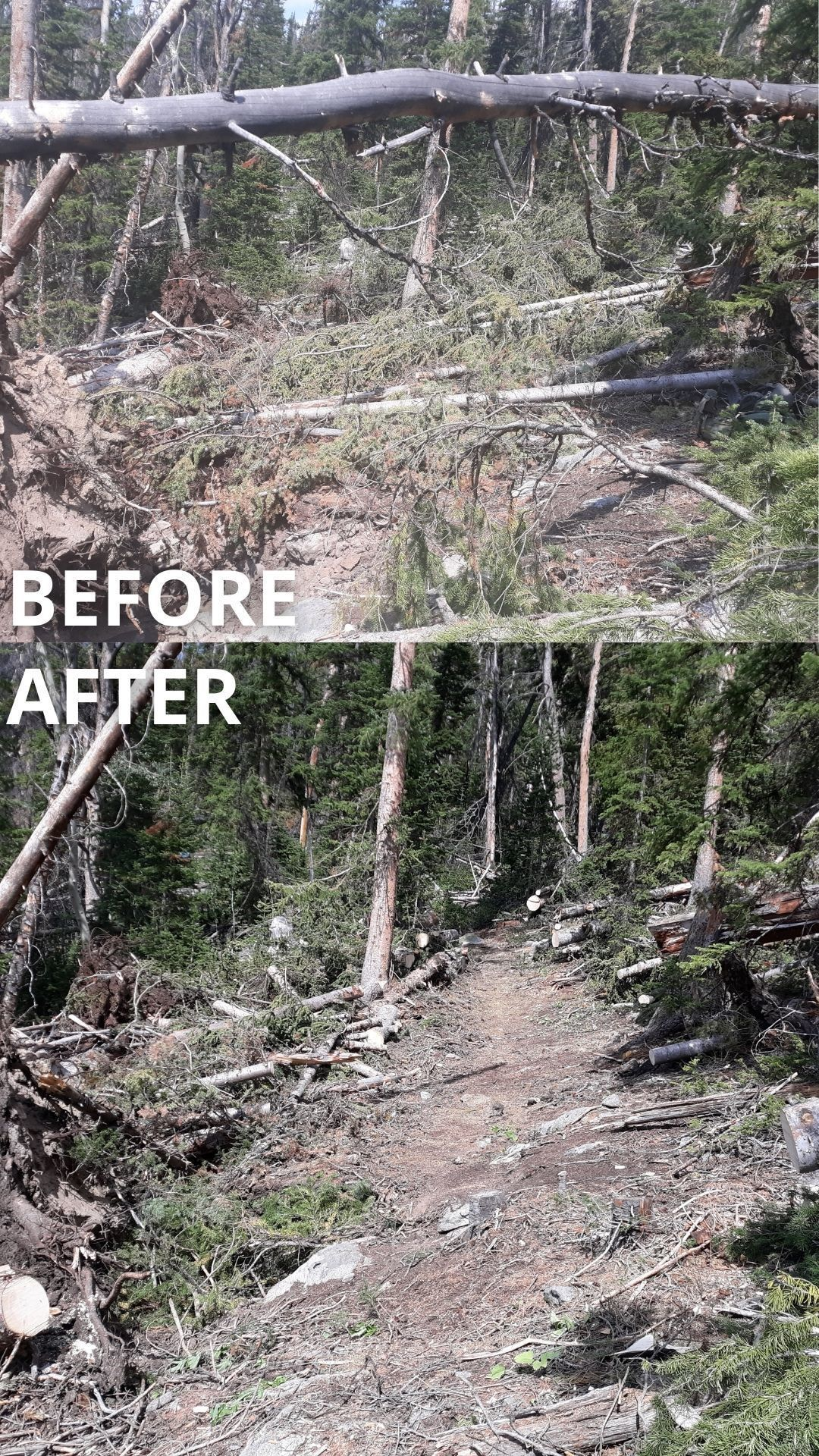 A before and after shot of the trail covered in trees, then cleared.