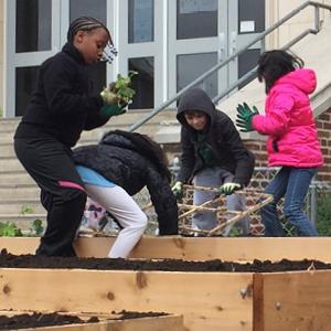 Increasing Monarchs at Lincoln Public Schools