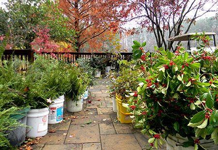 Holiday Greenery Sale