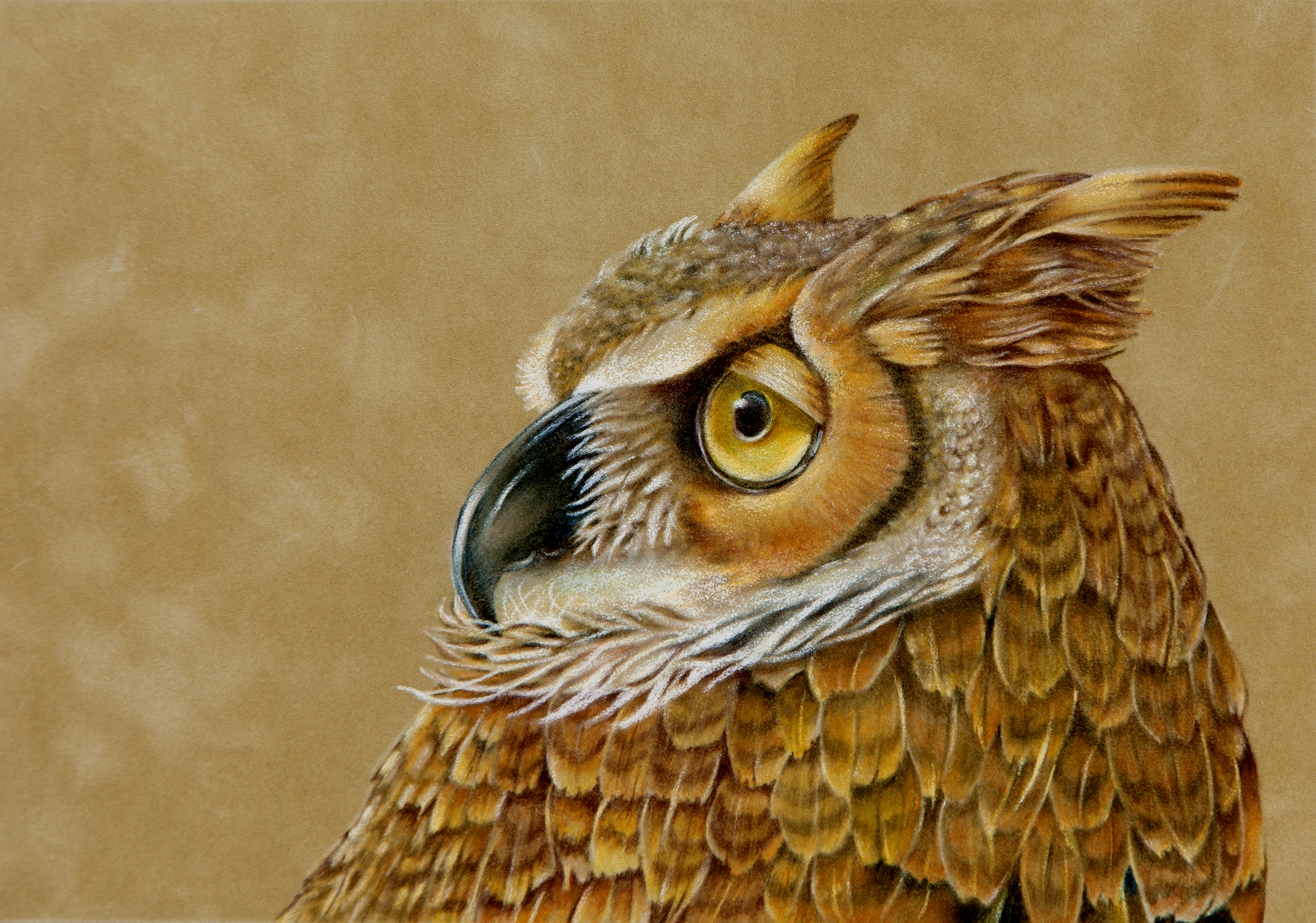 Class Series - Colored Pencil on Suede: A Blender's Delight (Great Horned Owl)