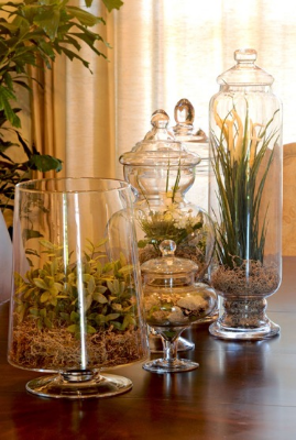 Giant glass bowls thrifted from Goodwill are perfect for creating your own terrarium.
