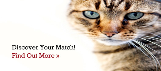Discover Your Match