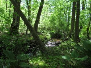 Experiencing Adkins Habitats