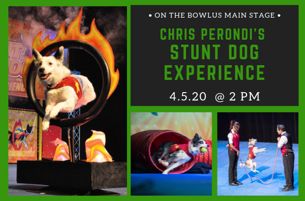 Chris Perondi's Stunt Dog Experience