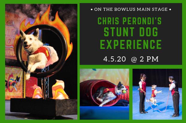 Chris Perondi's Stunt Dog Experience