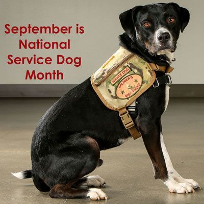 Did you know that September is National Service Dog Awareness Month?