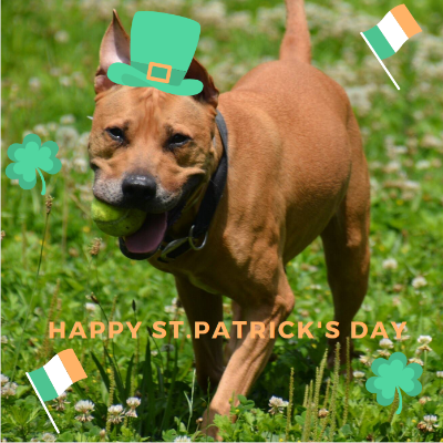 ST. PATRICK'S DAY WITH YOUR PUP