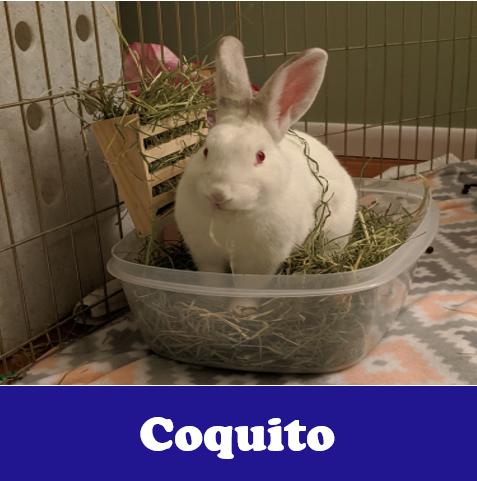 Coquito