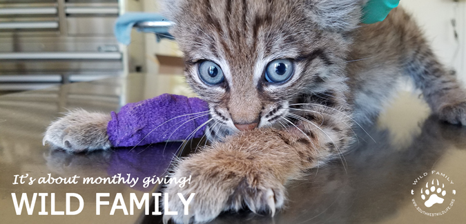 Wild Family - It's About Monthly Giving!