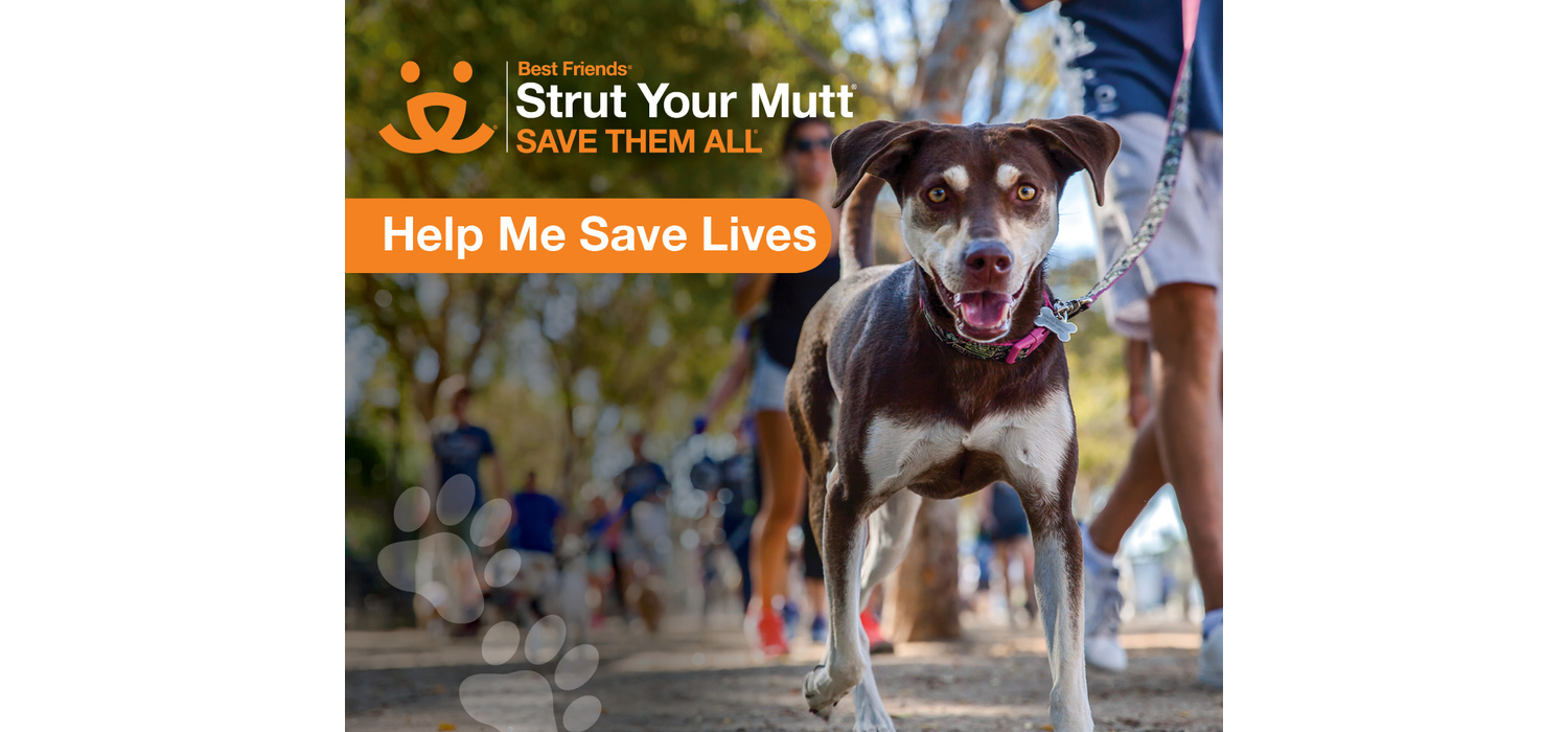 Join us at NYC Strut Your Mutt on 10/6!