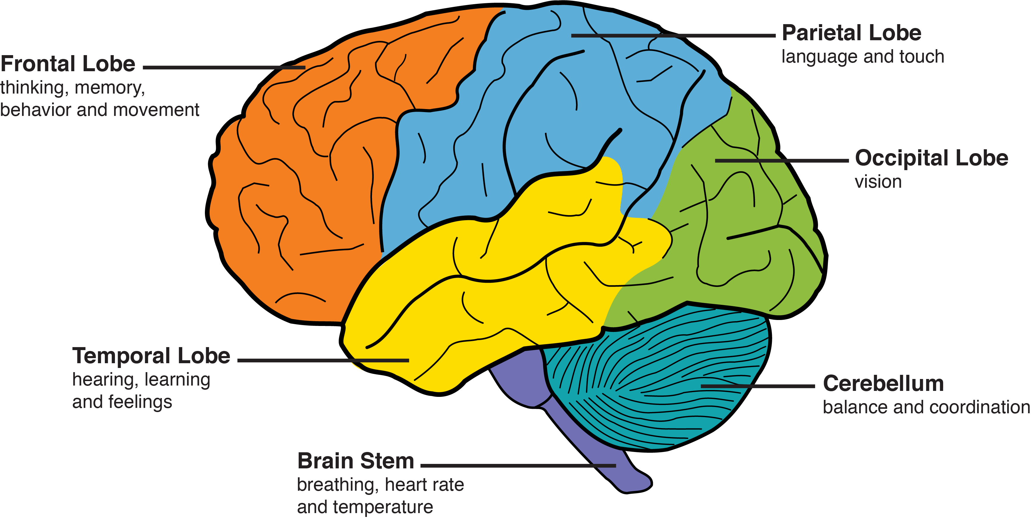 Nine Kinds of Dementia