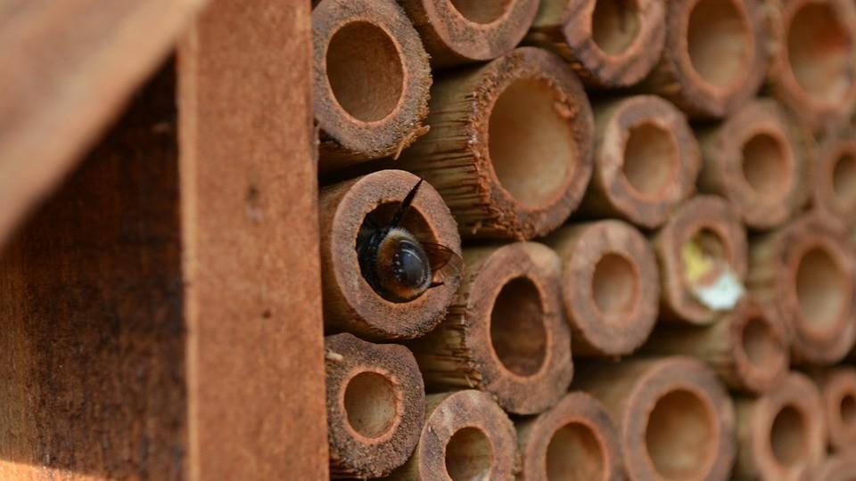 Help the Pollinators
