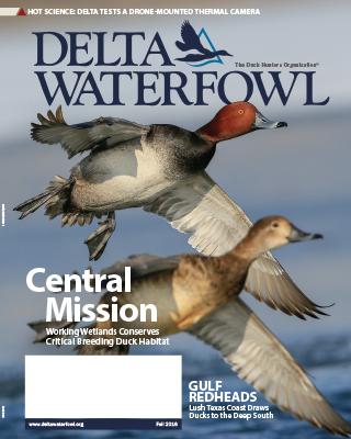 Fall Issue Highlights Hunting, Breeding Duck Habitat Program