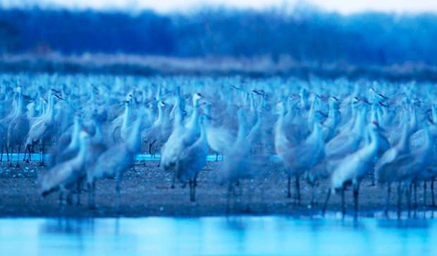 Meet the cranes up close