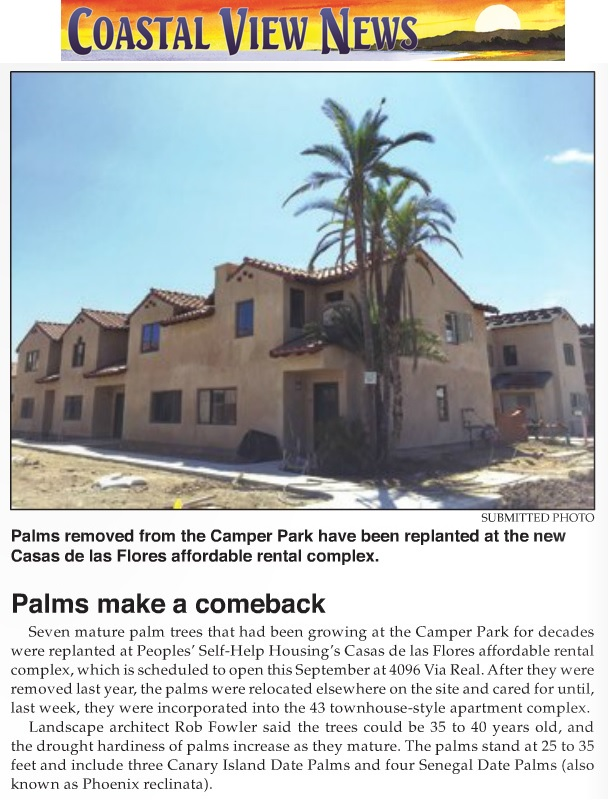 Palms make a comeback - Carpinteria Coastal View
