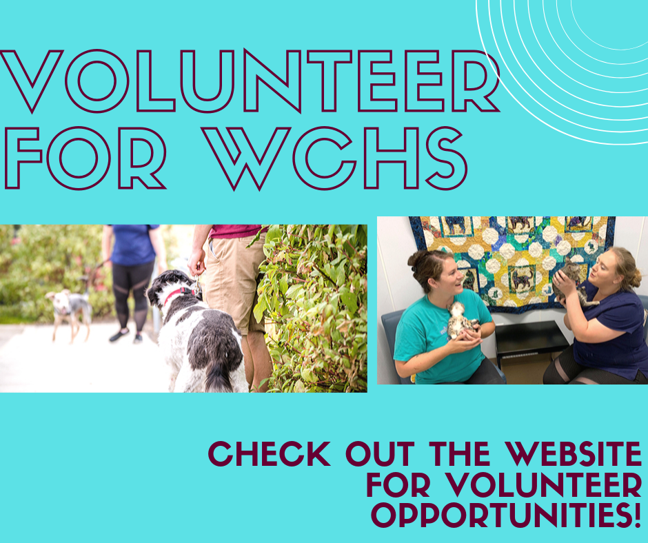 Become a Volunteer for WCHS