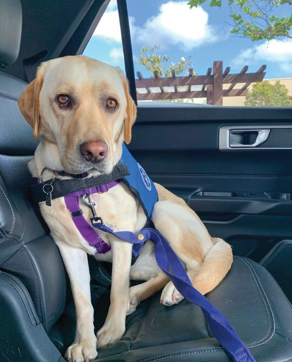 Service Dog Myths: 6 Common Misconceptions