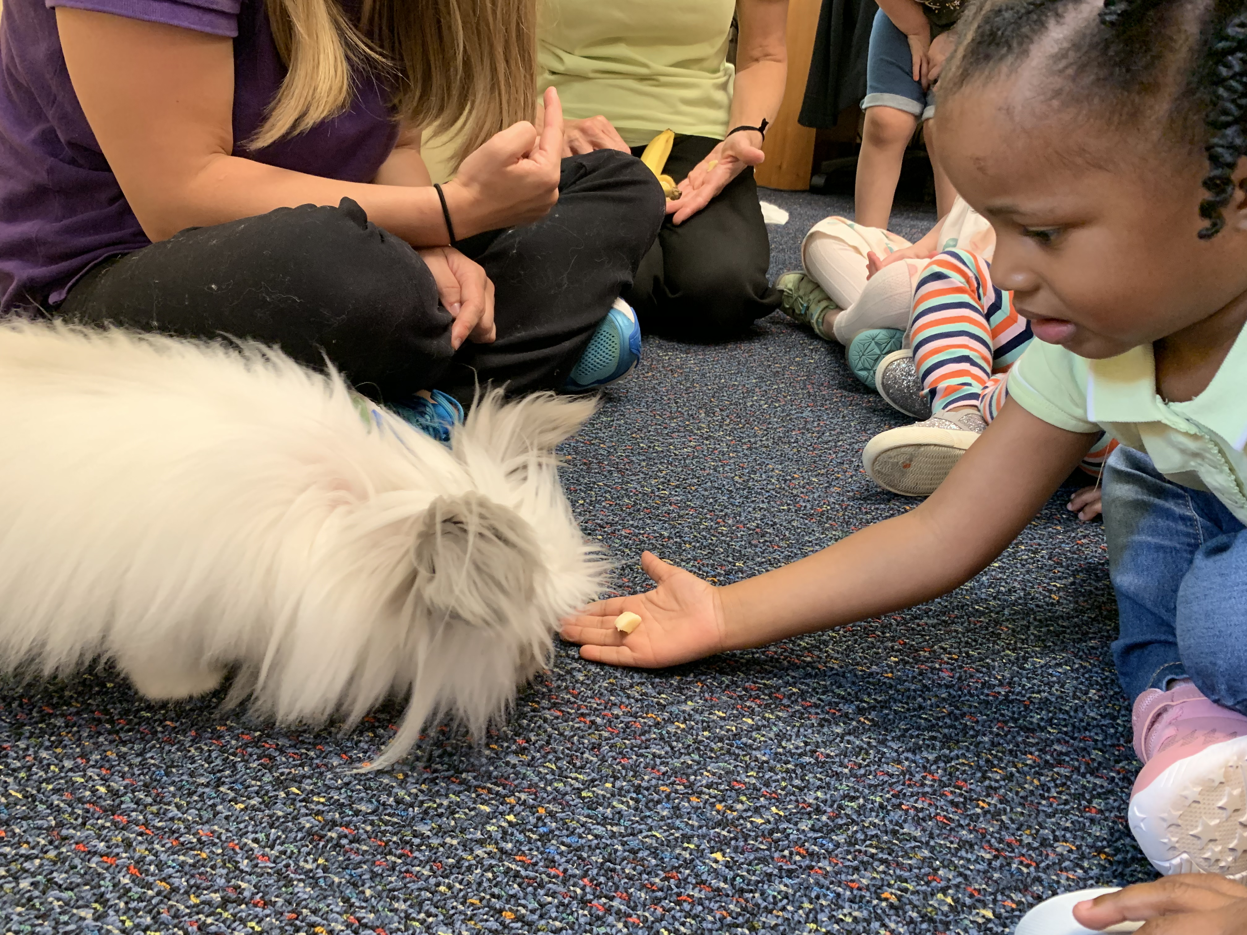Pets Week at MOSD