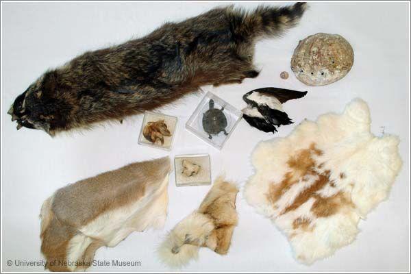 Animal Coverings Kit B