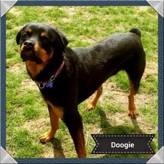 Doogie - ADOPTED