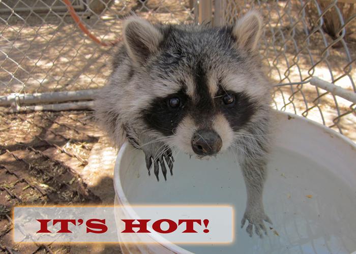 It's So Hot!