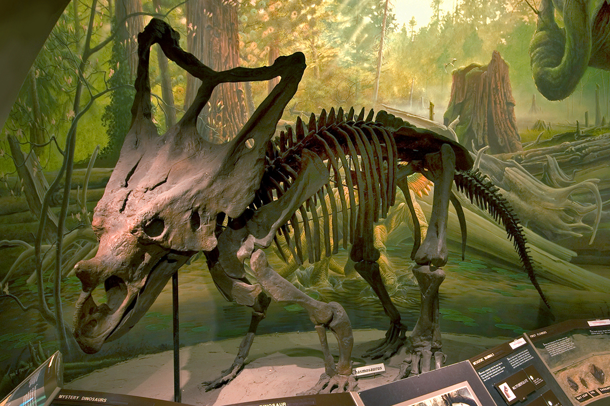 Mesozoic Gallery