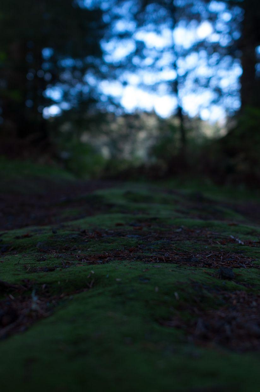 Ward Lake 9, Moss Path