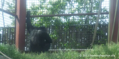 Learn About Chimpanzees in Captivity