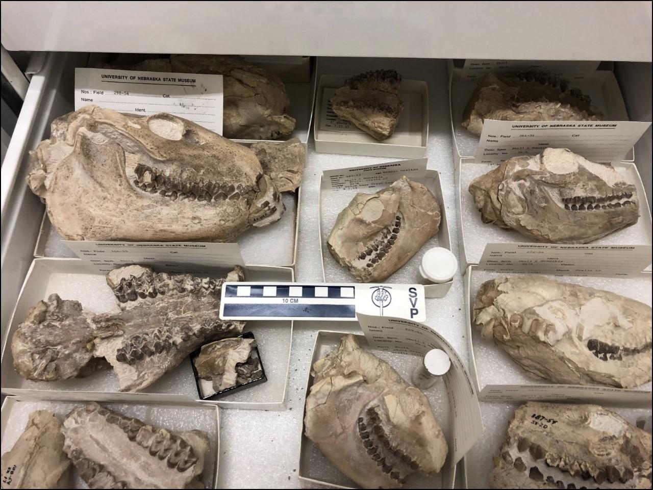 Prepared specimens